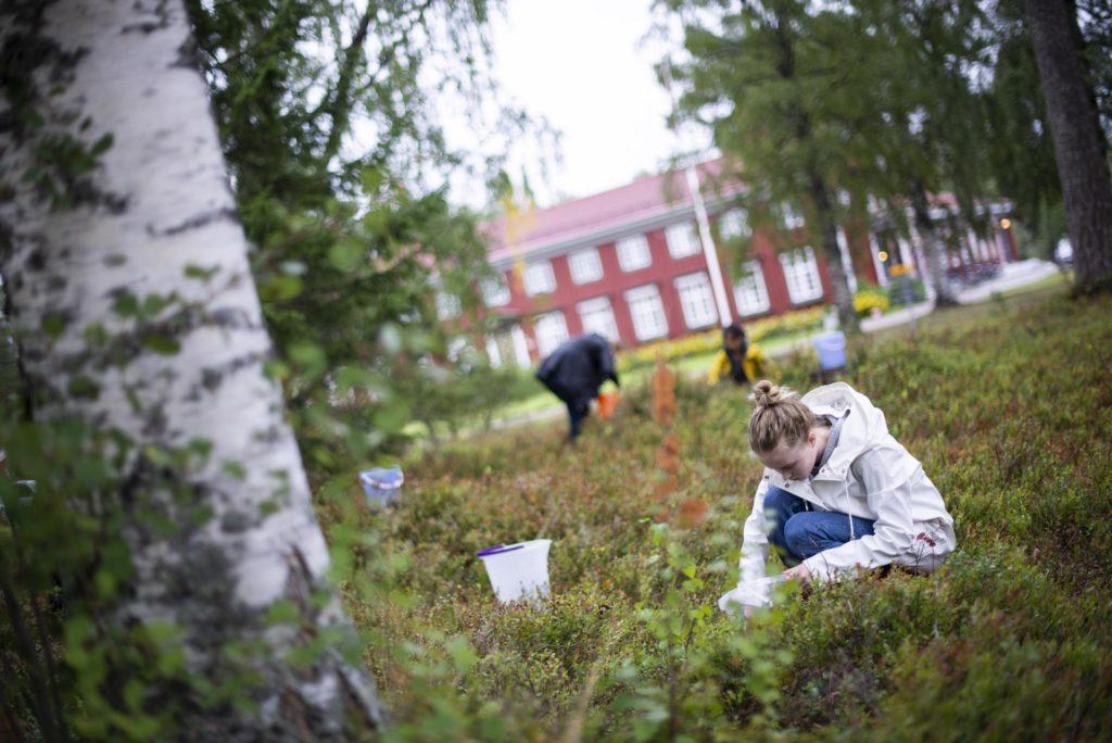 Elever plukker blåbær på Elverum folkehjøgskole