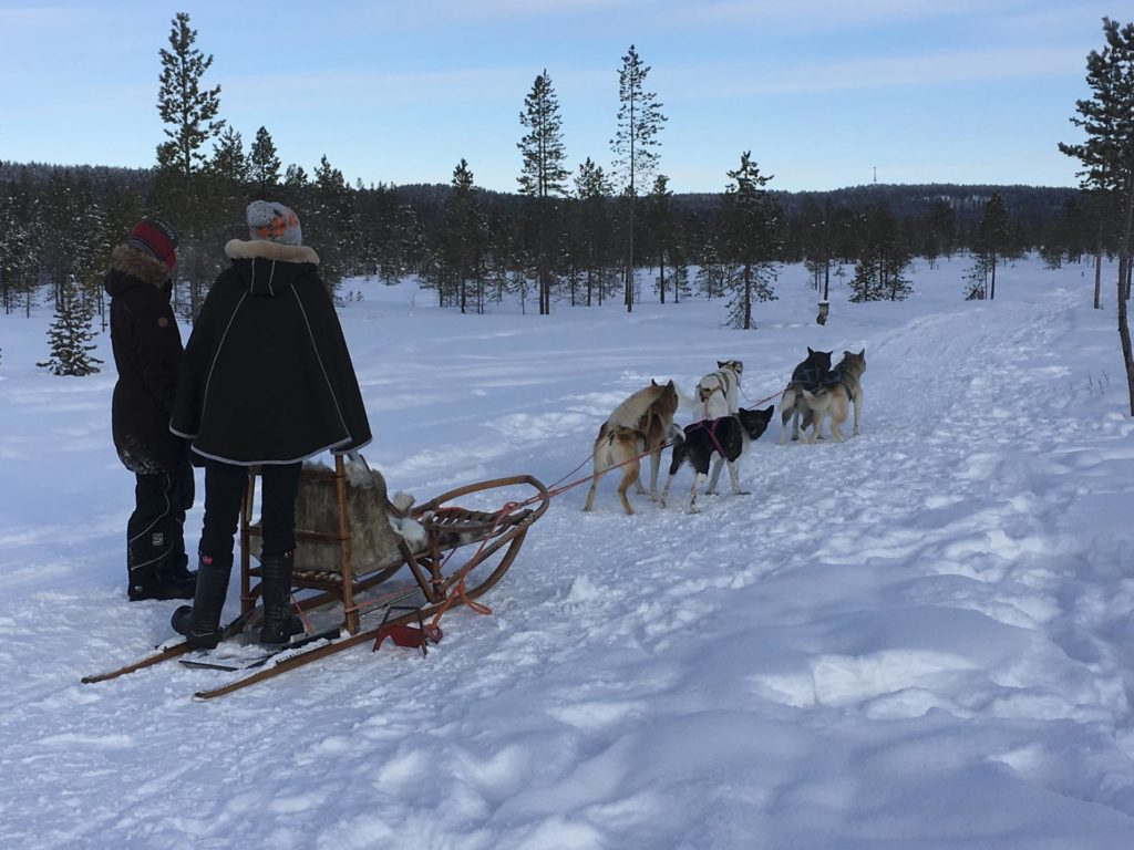 Dog sledding on snow