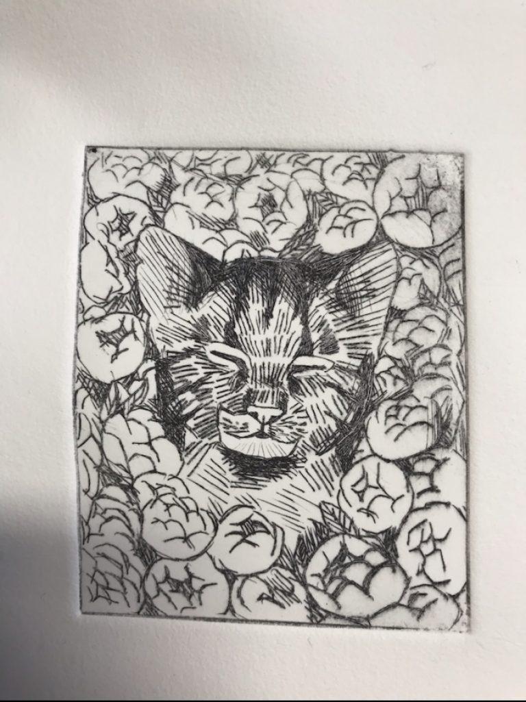 Dyptrykk av katt